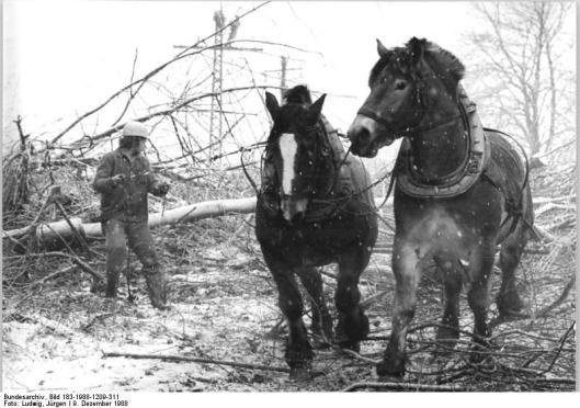 Bundesarchiv, Bild 183-1988-1209-311/CC-BY-SA